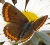 logo papillon