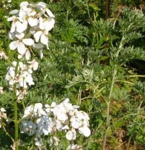 Bouquet de senteur 5 gr