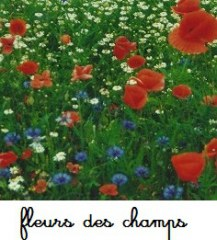 Fleurs et leurs milieux de vie