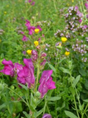 Fleurs de rocaille 5 gr