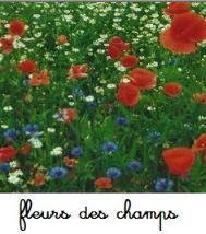 Fleurs des champs et des moissons