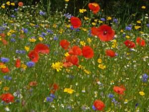 Fleurs des champs 50 gr