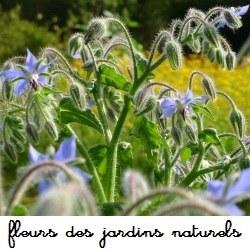 Fleurs des jardins naturels