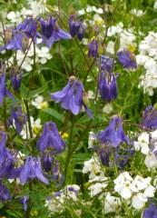 Fleurs des lisières 5 gr