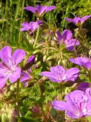 Fleurs des lisières 50 gr