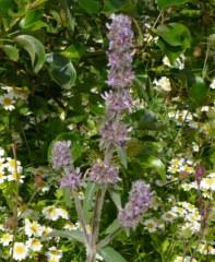 Fleurs des lisières 25 gr