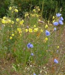 Jachère fleurie 50 gr