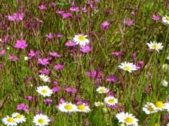 Fleurs de rocaille 25 gr