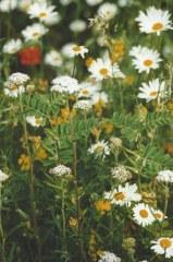 Prairie fleurie 5 gr