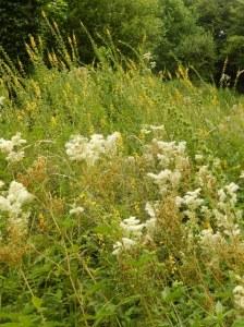Fleurs des rives et prairies humides 25 gr