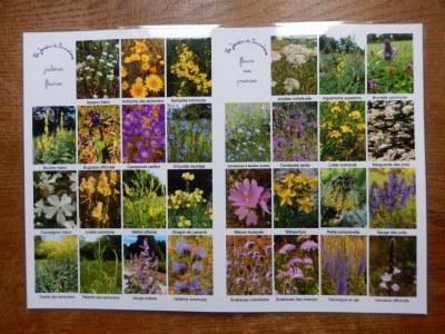 4 Sets de table A3 fleurs sauvages