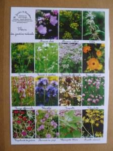 4 Sets de table A4 fleurs sauvages