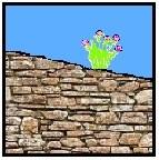 sur les murs et rochers