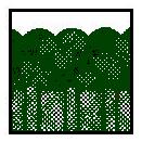 dans les sous-bois et forêts